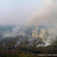 Kebakaran-cover-image_ribbet-1024x689-768x512
