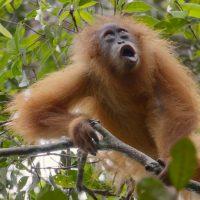 Tapanuli photo by Matt Senior