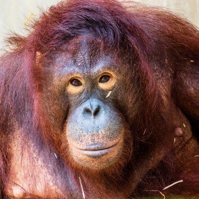 monkey-3508399_1280